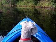 Hond op de boot